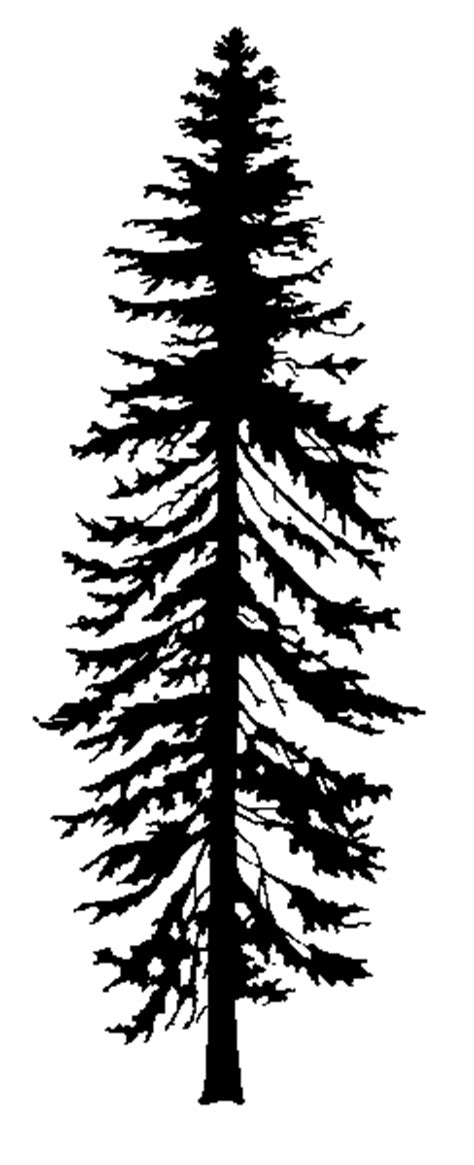 fir tree black and white bing images clip art