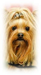 how to make yorkie hair bows dogs rule on treats treat recipes and food