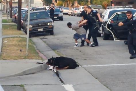 rottweiler kills kill outrage as california kill rottweiler in