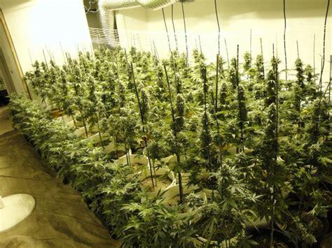 police raid west linn eugene marijuana operations