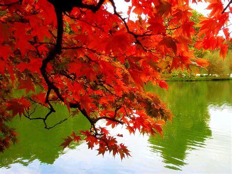 fall autumn autumn lifehelps