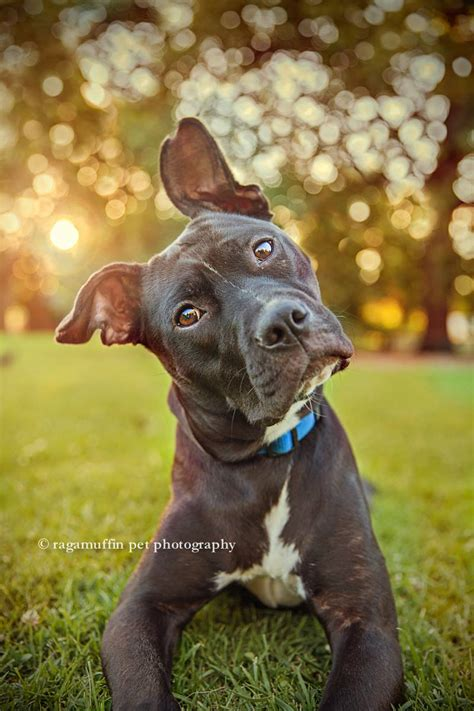 puppy photography top ten bokeh pet photography marketing and business education