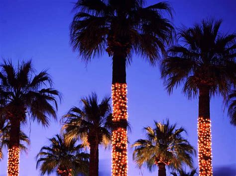 palm trees decorated with lights palm springs california