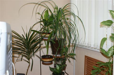 Houseplants by File Houseplants Jpg