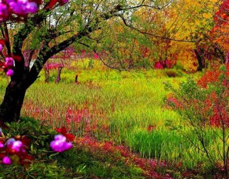 imagenes bellas hermosas y preciosas fotos e imagenes bonitas de paisajes de flores para