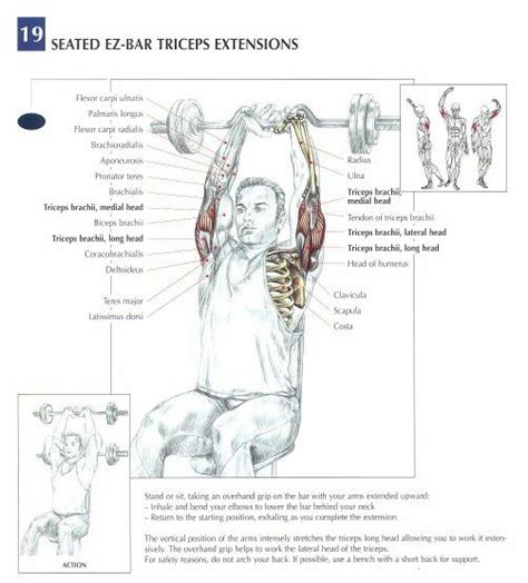 triceps diagram 1000 images about triceps workouts on