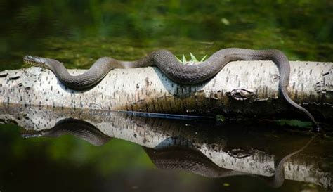 7 Most Poisonous Animals by Most Dangerous Animals In America Survival