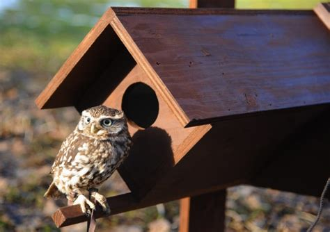 conservation teamwork helps build homes for owls at bergh