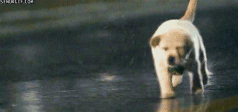 my 13 year old dog keeps peeing in the house rain postponement poll best rain gif