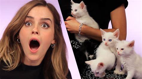 emma watson questions emma watson answer questions with kittens 102 3 jack fm
