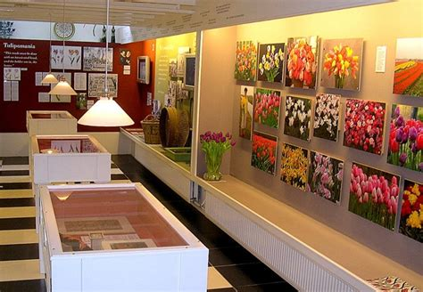 amsterdam museum flowers tulip museum in amsterdam amsterdam info