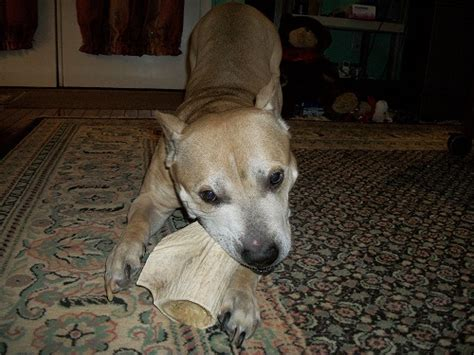 Grateful Shed Antler Chews by Ripper1