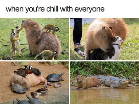 Animal Meme Pictures - animals are the source of the cutest memes 50 pics