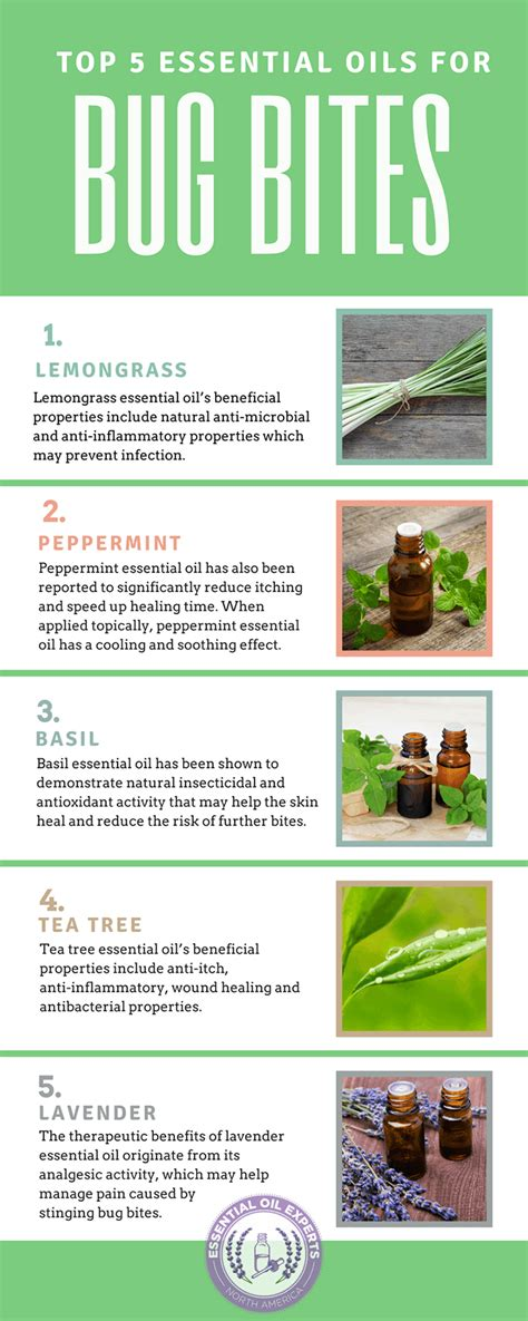 Insect Bites With Essential top 5 essential oils for bug bites mosquito spider