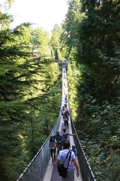 swinging bridge vancouver capilano swinging bridge picture of capilano suspension
