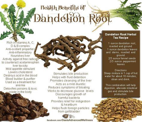 Detox Meaning In Marathi by Benefits Of Dandelion Root Taraxacum Officinale