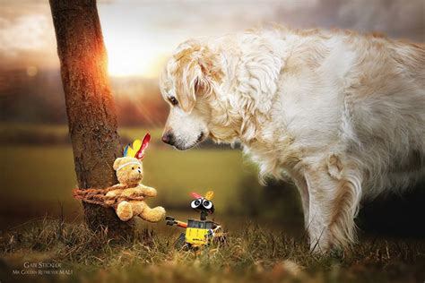 golden retriever teddy the adventures of golden retriever mali and his teddy bored panda