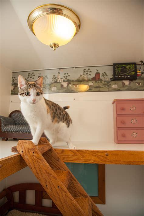 luxury cat boarding  morris animal inn morristown nj