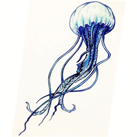 Drawing Jellyfish by Jellyfish Pencil And In Color Jellyfish