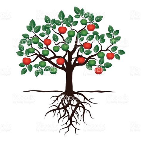 tree with green leafs roots and red apple stock vector art