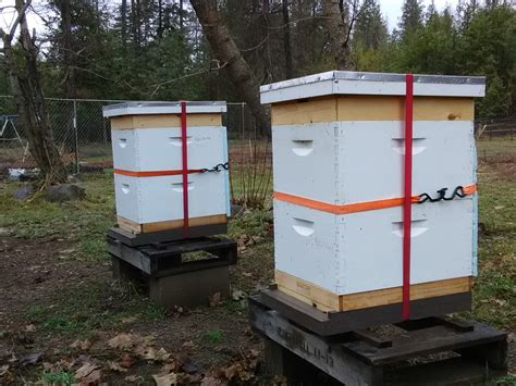 backyard beekeepers association overwintering my hives by greg heller backyard