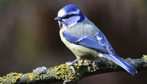 how birds listen without external ears environment news