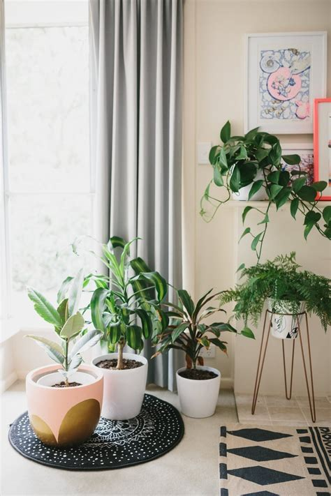 coole zimmerpflanzen visite une maison color 233 e et pleine de vie cocon de