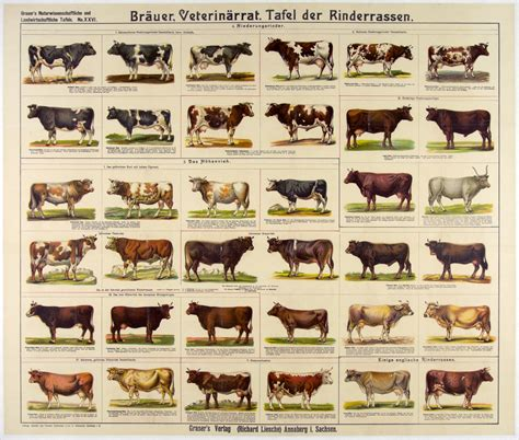 breeds of breeds of different animals on amazing charts earthly mission
