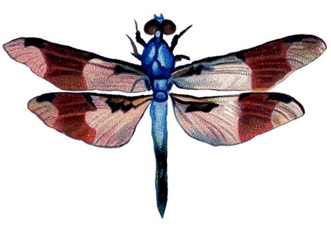 dragonfly clipart vintage clip colorful dragonfly the graphics