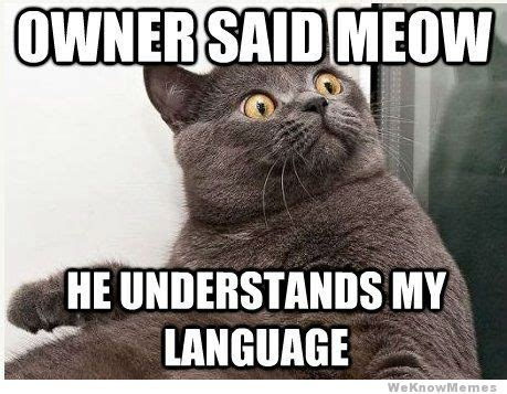 Meme Cat - sweeneyville meme ow
