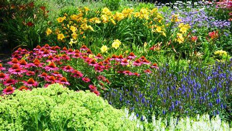 salt tolerant perennials 187 abby s parkside nursery