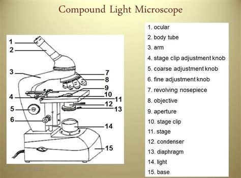 compound light microscope diagram worksheet sb13c angela