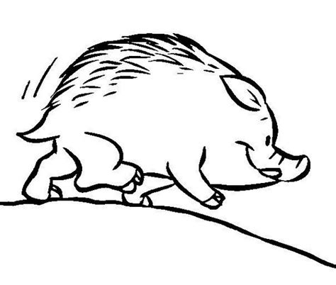 imagenes de animales jabali dibujos para colorear jabali