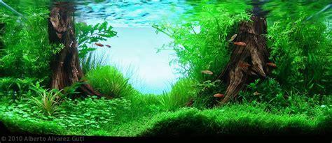 interior design aquascape manage  freshwater aquarium