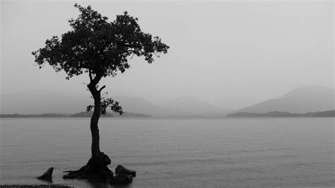 wallpaper trees black and white black and white tree wallpaper hd desktop wallpapers 4k hd