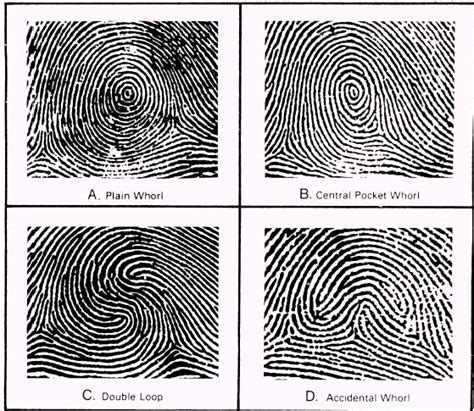 pattern types of fingerprints very popular images of fingerprint patterns