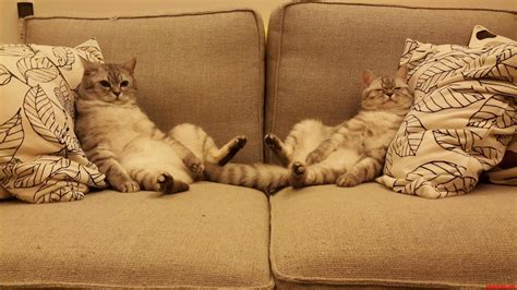 cats on the couch happy caturday lazy day on the couch 3 cute cats hq