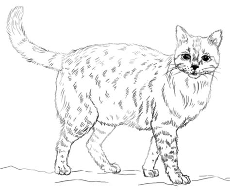 coloring pages of real kittens realistic cat coloring page cats pinterest printable