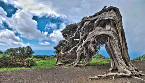 Trees From Around The World by 10 Of The Strangest Trees Around The World