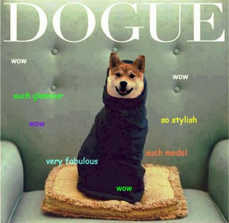 What Is Doge Meme - doge meme