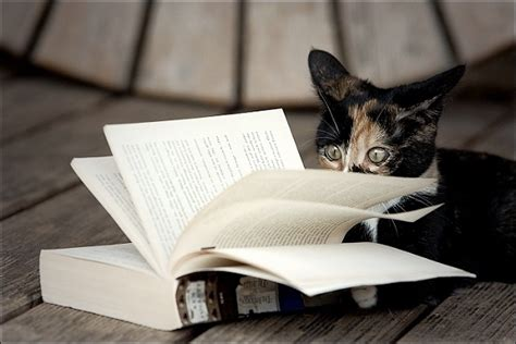 cats and books cats kittens reading books 18 pictures