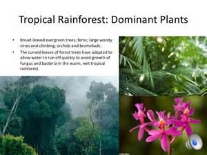 Plants Of Tropical Rainforest Biome - 10 biomes