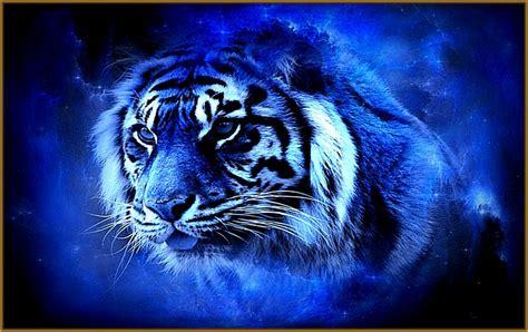 imagenes impactantes en hd imagenes de tigres de fuego azul impactantes fotos de tigres