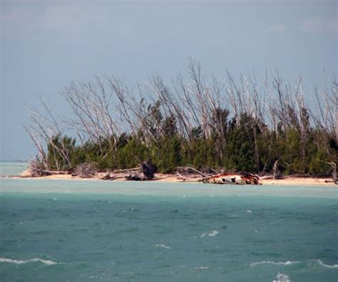 the christmas tree island commune mystery