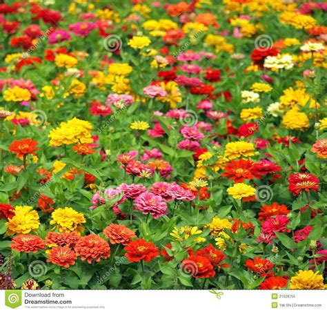 marigold color various field of flowers clipart clipart suggest