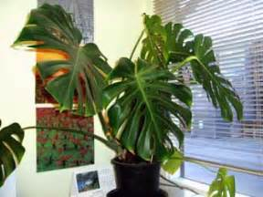 Tropical Foliage House Plants - tropical plants distance learning home study indoor plants