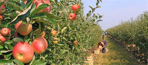 stranieri senza permesso di soggiorno imprenditore agricolo denunciato per impiego di operai