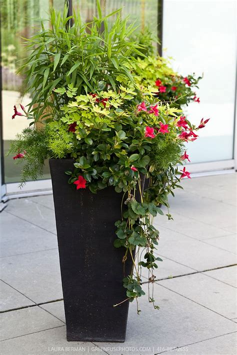decorative garden containers planting in large containers decorative planting in
