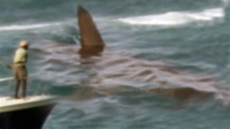 megalodon recent sightings megalodon shark caught on tape 2017 documentary