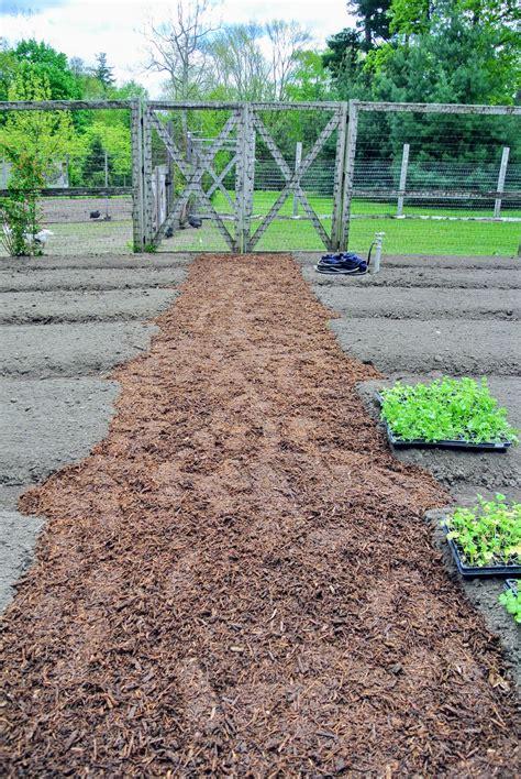 planting in the vegetable garden the martha stewart
